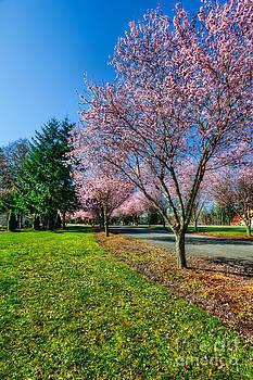 Jo Ann Snover - Spring tree blossoms