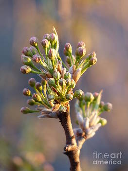 Christine Stack - Spring Tree Buds