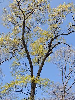 Anastasia Konn - Spring Trees