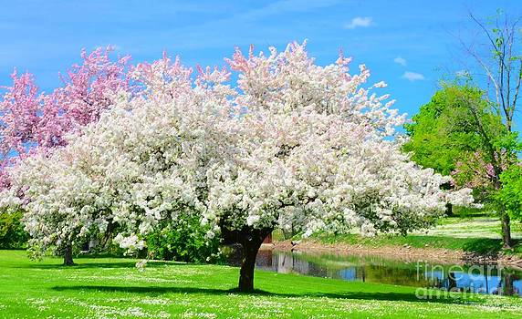 Spring Trees by Kathleen Struckle