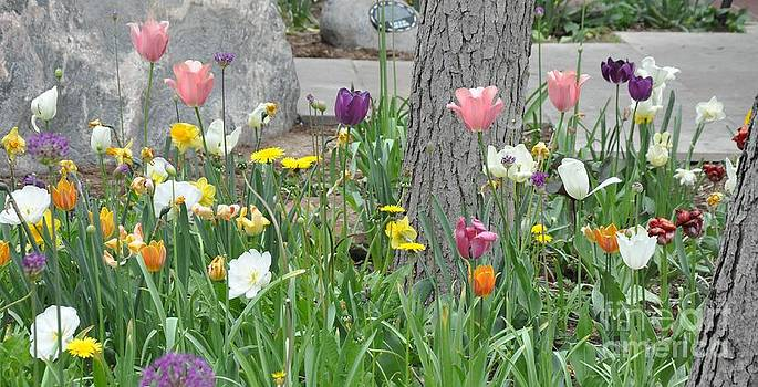 Spring Tulips   by R Mahlouji