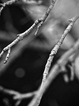 Sandy Tolman - Spring Twigs - 4694 bw