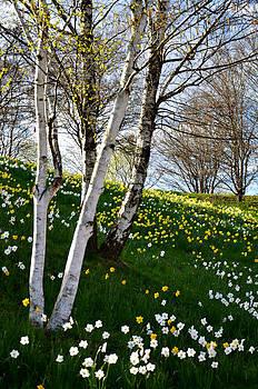 Gynt   - Spring view