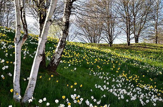Gynt   - Spring viewf - flowering Hill
