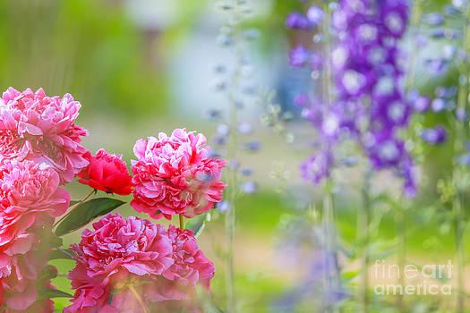 Alanna DPhoto - Spring Views