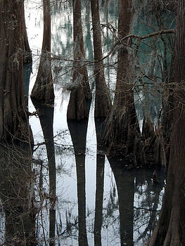 Spring Water Cypress Shadowed by Kim Pate