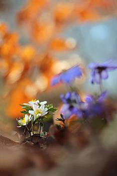 Spring wildflowers by Marek Mierzejewski