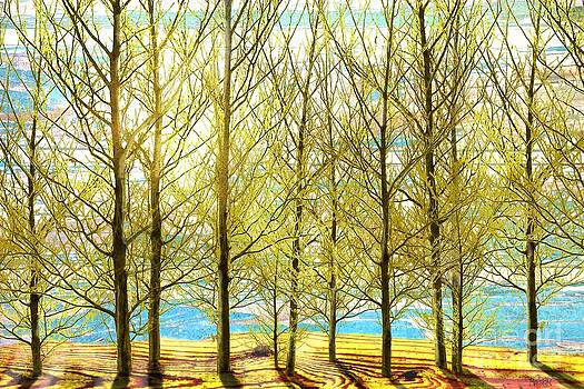 Spring Wood by Sharon Marcella Marston