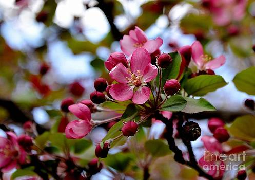 Spring1 by Galina Khlupina