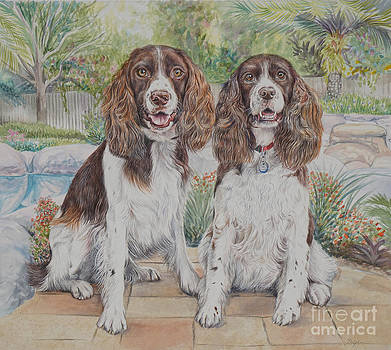 Springer Spaniels by Gail Dolphin