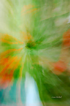 Donna Blackhall - Springing Into Life