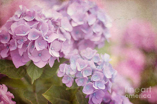 Springtime Blooms by A New Focus Photography