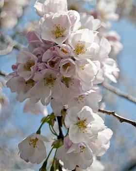 Leslie Cruz - Springtime Bouquet