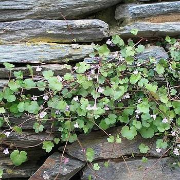 #springtime #clover Harpers Ferry by Auntie M