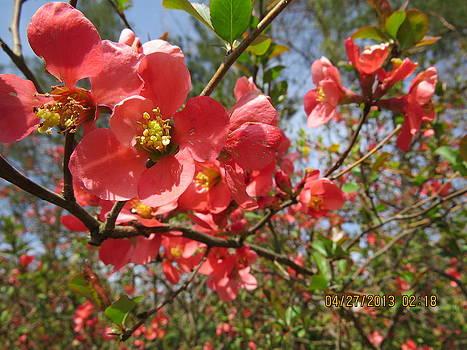 Springtime by Diane Mitchell