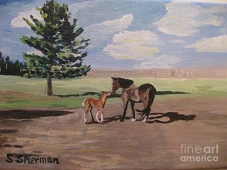 Stella Sherman - Springtime Foal