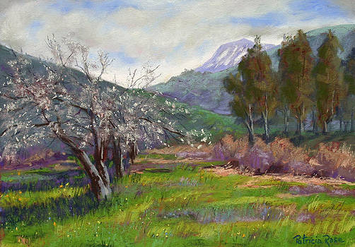 Springtime in Mias Canyon by Patricia Rose Ford