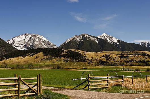 Springtime in Montana by Sue Smith
