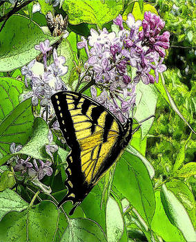Springtime Moments- The Butterfly And The Lilac  by Patricia Keller