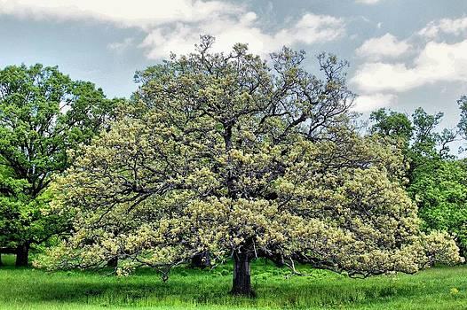 Rosanne Jordan - Springtime Oak in the Meadow