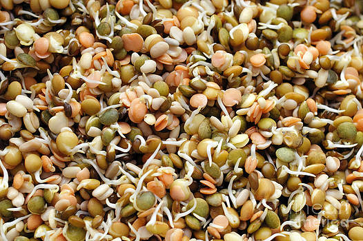Sprouting Lentils Mix by Lee Serenethos