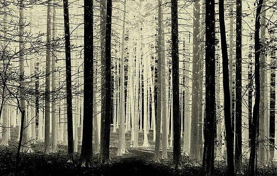 Rosanne Jordan - Spruce Magic