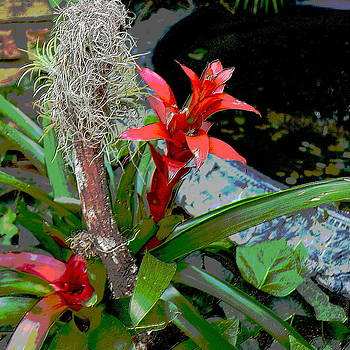 Square format poster BROMELIAD by Merridy Jeffery