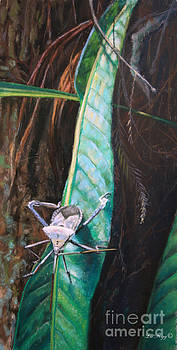 Squash Bug on Florida Strap Fern by Deb LaFogg-Docherty