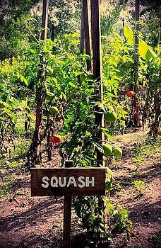 Squash or Tomato by Ted Mahy
