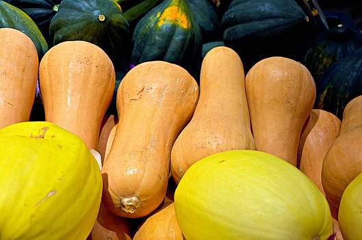 Robert Meyers-Lussier - Squashes