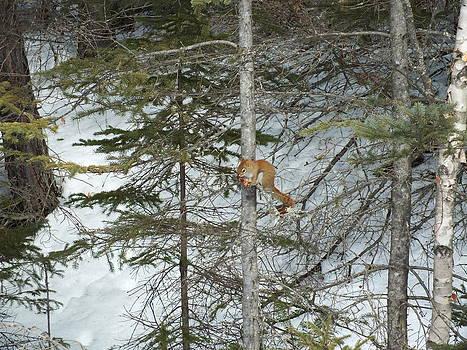 Squirrel 3 by Gene Cyr
