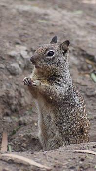 Squirrel by Amanda Peik