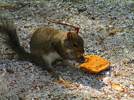 Squirrel and Cookie by Elaine Haakenson