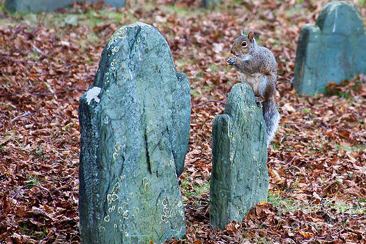 Squirrel at Burial Hill by Wayne Valler