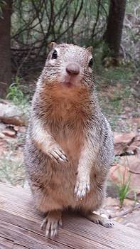 Squirrel at Zion by Justyne Moore