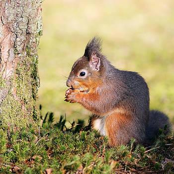Squirrel by Grant Glendinning