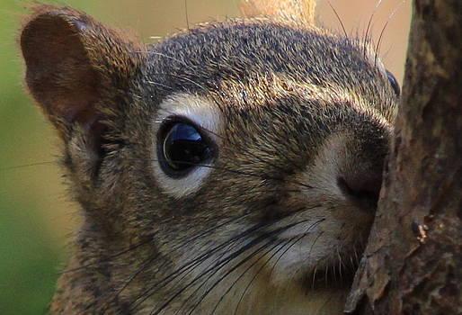 Squirrel Head  by Ellen Ryan