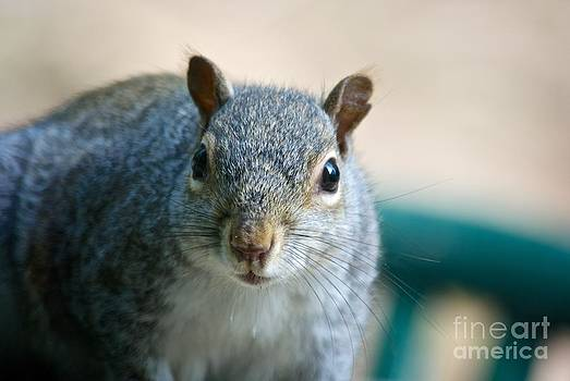 Squirrel  by Kamgeek Photography