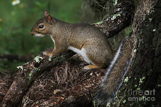 Squirrel by Lynn Jackson