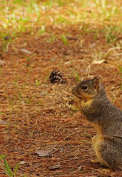 Billy  Griffis Jr - Squirrel Munching Out