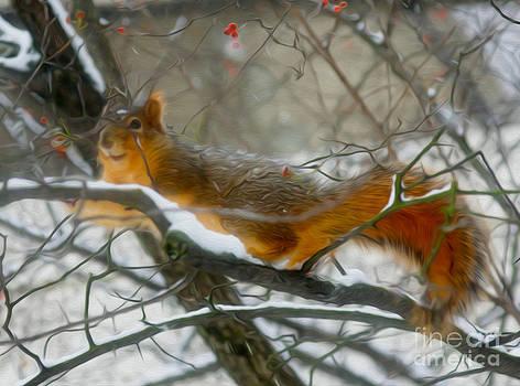 Squirrel by Nur Roy