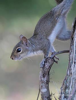 Deborah Benoit - Squirrel Pose