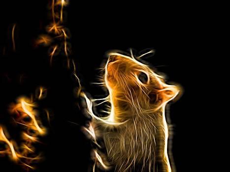 Squirrel by Ron Harpham