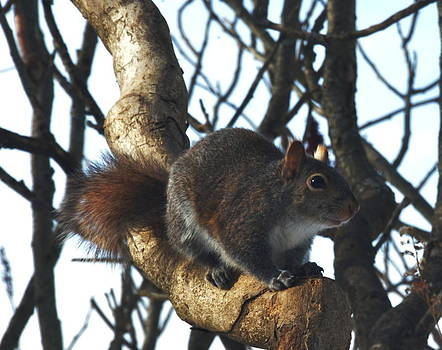 Squirrel Searching For Seeds by Xcape Photography