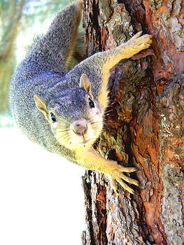 Squirrel up a tree by Jonathan Androwski