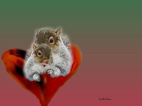 Mike Breau - Squirrels Valentine