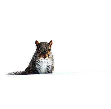 Squirrely in the Snow by Amanda Lomonaco