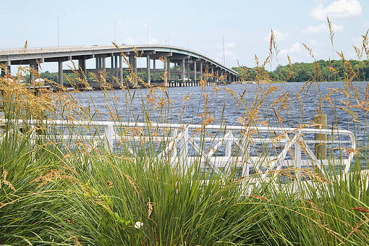 St Johns River by Courtney Geck