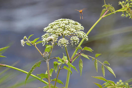 St Johns River Flower by Courtney Geck