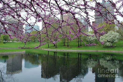 St. Louis through the Red Buds by Theresa Willingham